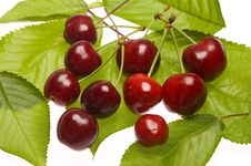 Free Cherries On Leaves Royalty Free Stock Image - 9619816