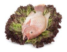 Free Fish Tilapia On Salad Royalty Free Stock Photo - 9619875