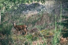 Free Deer On Mountain Meadow Stock Photography - 96114142