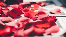 Free Rose Petals Close Up  Royalty Free Stock Photos - 96114678
