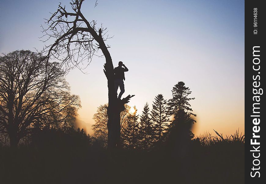 Silhouette of man standing in tree at sunset