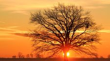 Free Silhouette Bare Tree Against Sky During Sunset Stock Photos - 96160693