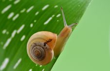 Free Snail Stock Image - 9621061