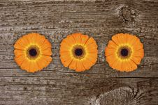 Free Gerbera Royalty Free Stock Photography - 9624497