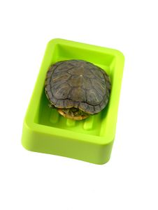 Free Tortoise In Soap Box Royalty Free Stock Images - 9624879