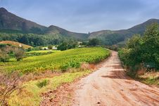 Vineyard Road Bend Royalty Free Stock Photo