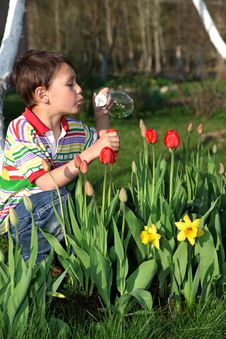 Free Boy With Tulips Stock Photography - 9625252