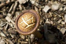 Free Mottled Bolete Mushroom Stock Photos - 9627103