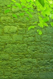 Free Green Leafs And Stone Wall Royalty Free Stock Photography - 9627287