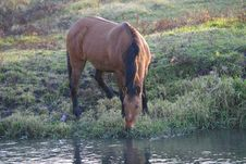 Free Horse Grazing Royalty Free Stock Photos - 9627848