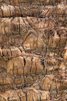 Free Palm Tree Texture Royalty Free Stock Image - 9628016