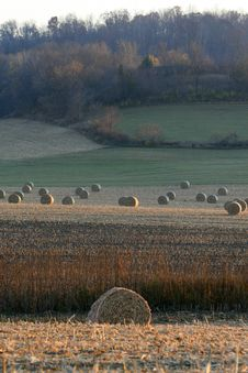 Free Rolls Of Hay Royalty Free Stock Photos - 9628358