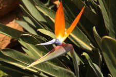 Free Bird Of Paradise Stock Photography - 9628412