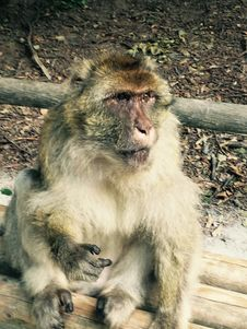 Free Monkey Sitting On Bench Royalty Free Stock Photos - 96215748