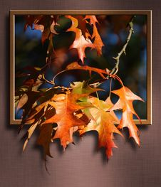 Free Leaf, Maple Leaf, Autumn, Tree Royalty Free Stock Images - 96249959
