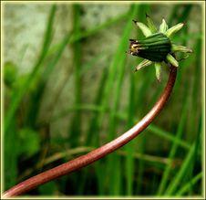 Free Flora, Plant, Grass, Plant Stem Stock Photography - 96250442