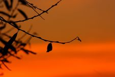 Free Sky, Branch, Orange, Silhouette Royalty Free Stock Images - 96250489