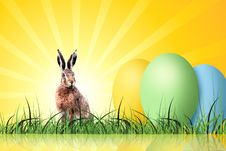 Free Grass, Hare, Rabits And Hares, Rabbit Royalty Free Stock Images - 96250929