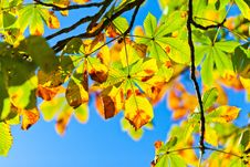 Free Leaf, Yellow, Autumn, Branch Royalty Free Stock Image - 96259966