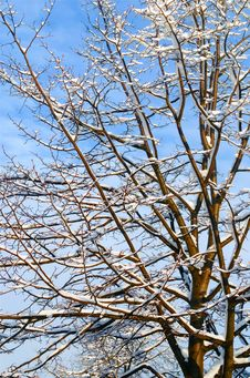 Free Branch, Tree, Sky, Twig Royalty Free Stock Photo - 96260365