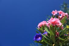 Free Flower, Sky, Plant, Flowering Plant Stock Photography - 96261642