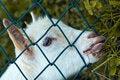 Free A Mammal Browsing Grass Stock Photos - 9638903