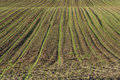Free Lines In The Field Stock Image - 9639051