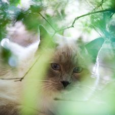 Free Cat Face Stock Photography - 9633152