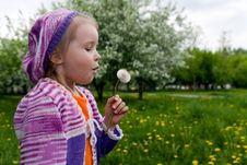 Free The Girl And A Dandelion Stock Photography - 9635002