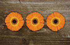 Free Gerbera Royalty Free Stock Image - 9635416
