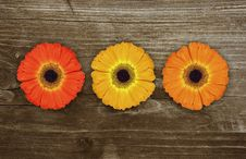 Free Gerbera Royalty Free Stock Photography - 9635487