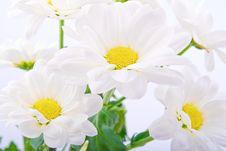Free Beautiful Flowers On White Background Stock Image - 9635751