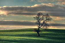 Free Lonely Tree Royalty Free Stock Photos - 9635918