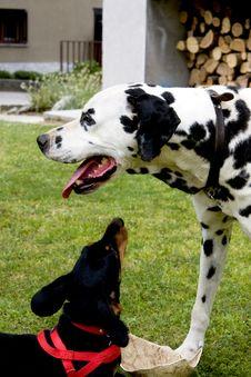 Free Dogs In The Garden Stock Photos - 9637513