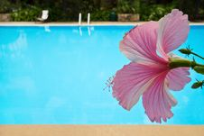 Free Pool Flower Stock Photography - 9638462