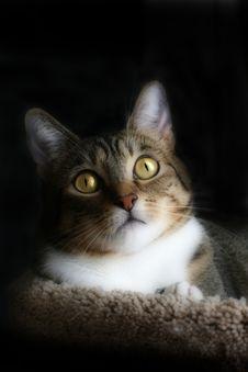 Free Alert Cat Stock Photo - 9639540