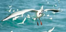 Free Close-up Of Seagull Royalty Free Stock Photos - 9639938