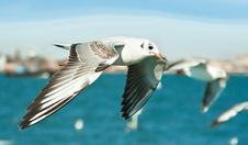 Free Close-up Of Seagull Stock Photos - 9639953