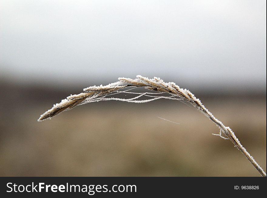 Frozen stalk