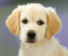 Free Dog, Dog Like Mammal, Dog Breed, Golden Retriever Stock Photo - 96322170
