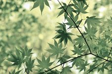 Free Green Leafy Plant Royalty Free Stock Photography - 96364367