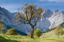 Free Tree In Mountains Stock Photos - 96364473