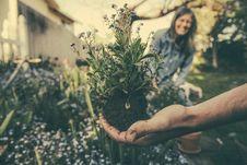 Free Planting Flowers Stock Photo - 96365240