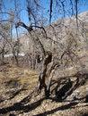 Free Mountain Tree Under Autumn Sun Stock Images - 9641134