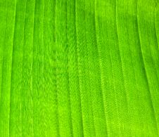 Free Green Stock Images - 9640094