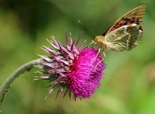 Free Butterfly Stock Images - 9640384