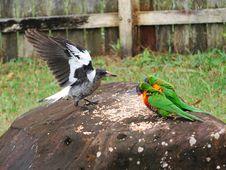 Free Three Birds Stock Image - 9640721