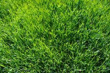Free Background Green Lawn Stock Photo - 9641280