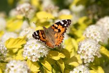 The Butterfly On White Colors Stock Photography