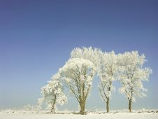 Free Winter Scenery, Frost Covered The Trees Royalty Free Stock Photography - 9641707